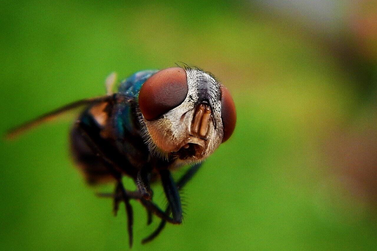 Jednoduché spôsoby, ako zastaviť nepríjemné svrbenie po uštipnutí komárom